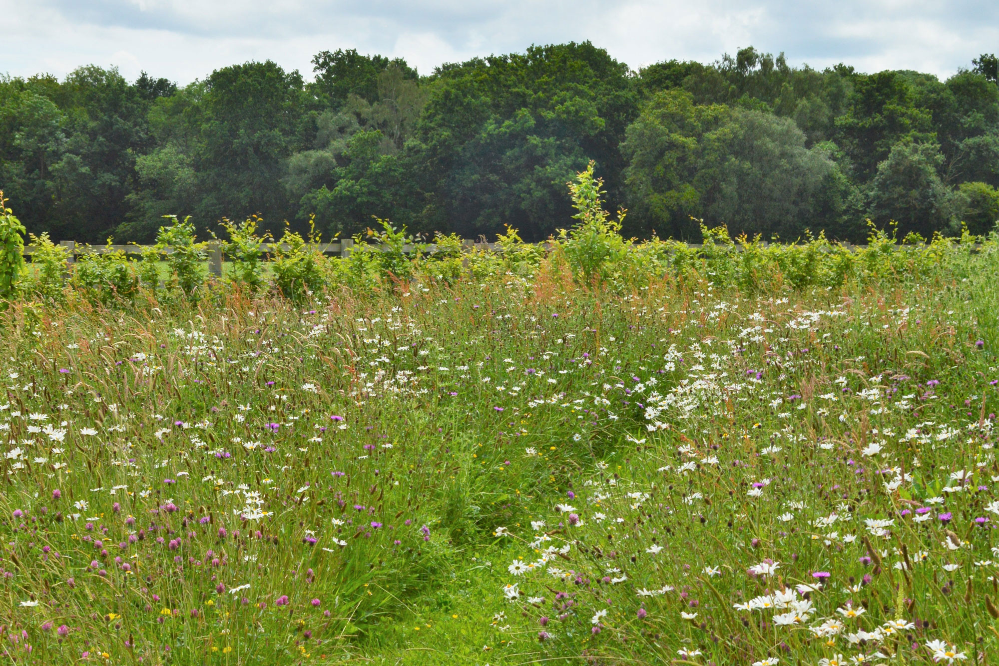 Wildflower meadow design